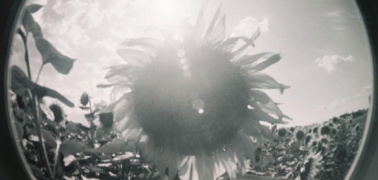 cropped-olenka-avec-tournesol-saintjory-2014.jpg